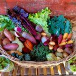 Basket of Sexy Winter Veggies